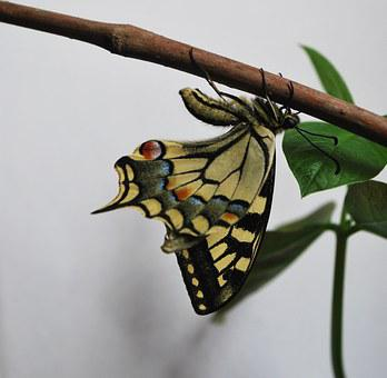 Swallowtail Butterfly, Large, Colorful, Wood, Stick