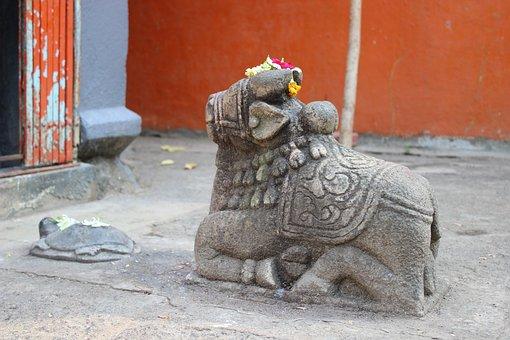 Temple, Cow, Nandi, Indian, Sacred, Animal, Worship