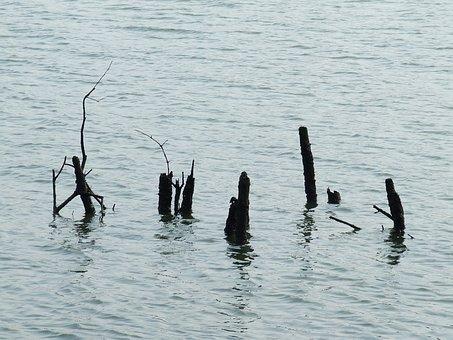 The Mangroves, Water, Deadwood