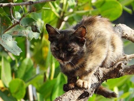 Kitten, Cat, Feline, Cute, Kitty, Tree, Climb, Mangrove