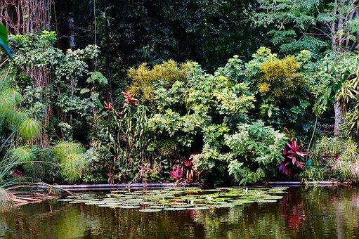 El Salvador, Island, Nature, Water, Mangrove Swamp