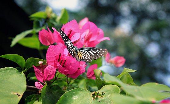 Flower, Sky, Summer, Green, Spring, White, Field