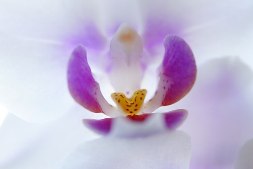 Orchid, Inner, Blossom, Bloom, Flower, Close, Beautiful