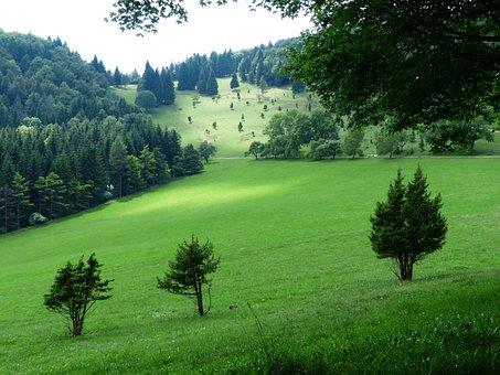 Balingen Alb, Swabian Alb, Idyll, Reported, Forests
