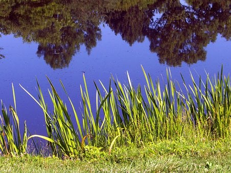 Pond, Lake, Weeds, Sky, Reflection, Trees, Water