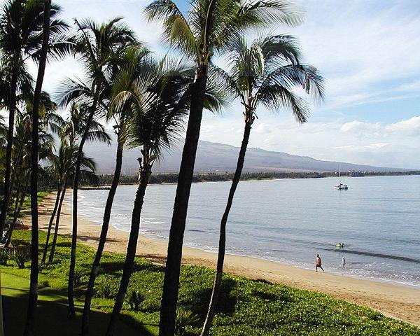 Beach, Palms, Kihei, Maui, Hawaii, Ocean, Pacific, Sand
