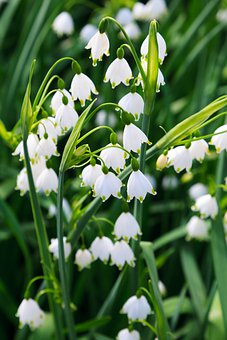 Beautiful, Bloom, Blossom, Botany, Flora, Flower