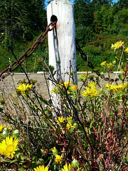 Wildflowers, Chain, Nature, Post, Grass, Wilderness