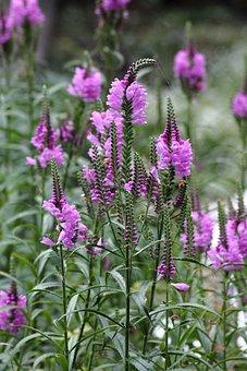 Last Blossom, Flowers, Purple, Bloom, Plant, Nature