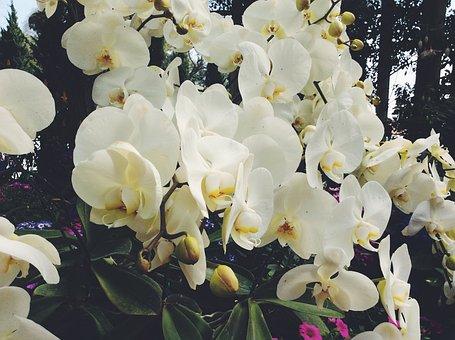 Flower, Thai, Thailand, Natural, Plant, Green, Asia