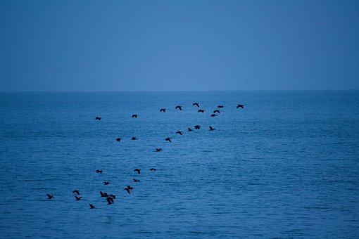 Birds, Flock, Flying, Over, Water, Blue, Sky, Ocean