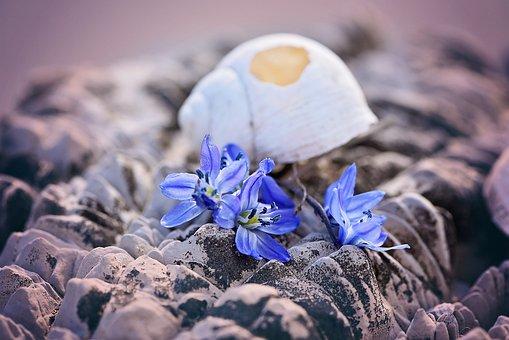 Shell, Empty, Broken, Damaged, Flowers, Blue