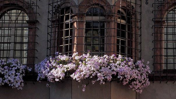 Surfinie, Window, Iron Lattice, Wrought Iron, Flowers