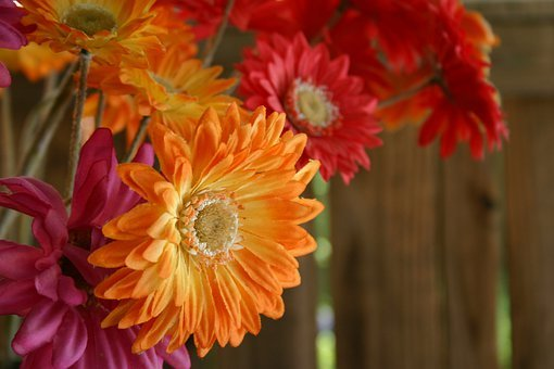 Gerber, Gerber Daisy, Bouquet, Pink, Orange, Flowers