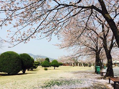 Seoul, Gwacheon, Horse, Horse Racing Park