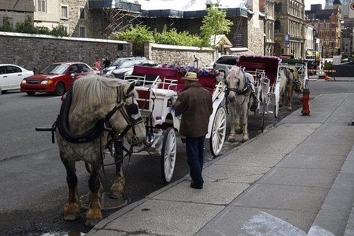 Horse Buggy, Horses, Coach, Wedding, Carriage