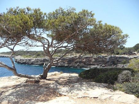 Mediterranean, Sea, Coast, Rocky Coast, Rocky, Mallorca