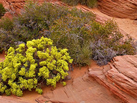 Sage Brush, Bush, Nature, Hot, Dry, Erosion, Desert