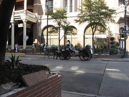 Horse, Buggy, Romantic, Coach, Activity, Austin, Texas