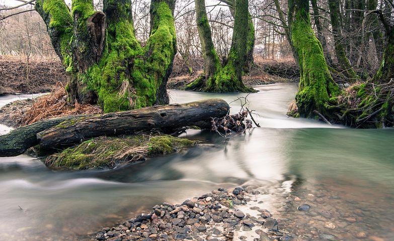 Creek, River, Ipel, Trees, Nature, Water