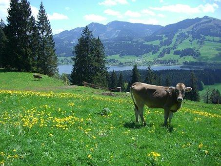 Ellegghoehe, Gruentensee, Alpine Pointed, Edelsberg