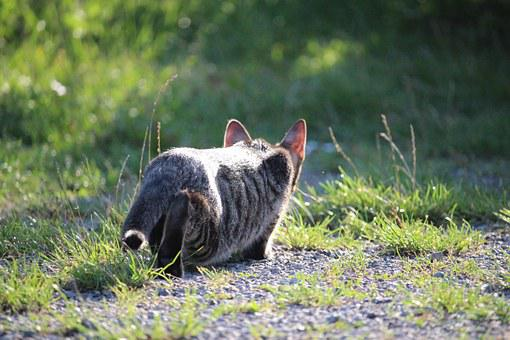 Cat, Kitten, Sneak Up On, Cat Baby