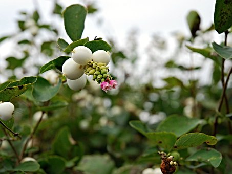 Autumn, Fruits, Brulinky, Flower, Tickets, Green