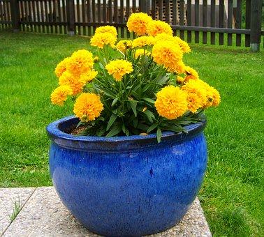 Amaranth, Yellow Summer Flowers, Flower Garden