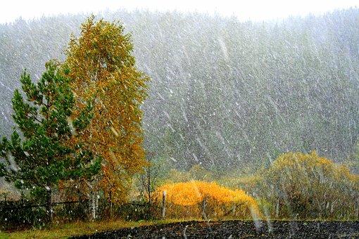 It's Snowing, Living Nature, Plant, Closeup, Greens