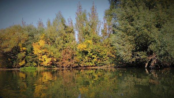 The Little Danube, River, Slovakia, Trees, Nature