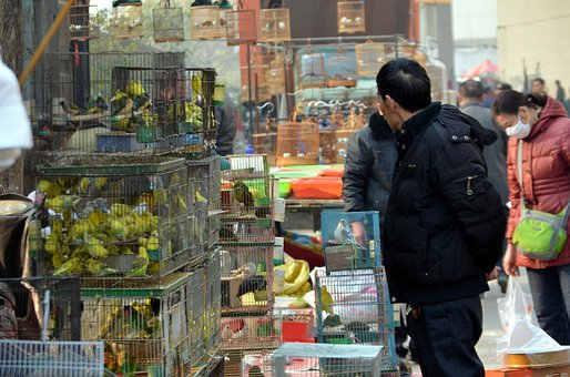Business, Bird Market, Market, Animals, Pets, Sale