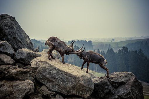 Capricorn, Rock, Animal, Mountains, Alpine Ibex, Alpine