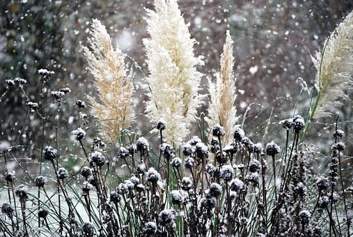 Snow, It's Snowing, Winter, Frost, Snowflakes, Nature