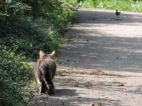 Cat, Hunt, Stray, Nature, Stalk, Stalking, Sneak Up On