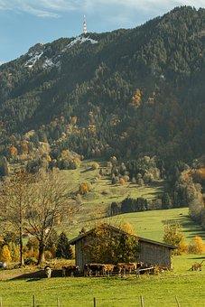 Allgäu, Cows, Autumn, Agriculture, Landscape, Farmhouse