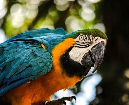 Macaw, Blue Gold Macaw, Bird, Tropical Bird, Parrot