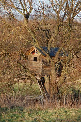 Cabin, Wood, Treehouse, Tree, Take Refuge, Tranquility