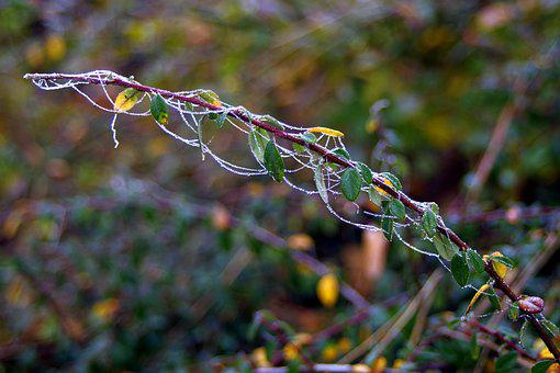 Frost, Cobweb, Icy, Ice, Frozen, Sprig, Winter