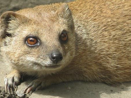Meerkat, Děčín Zoo, Cute, Beautiful, Nature, Mammal