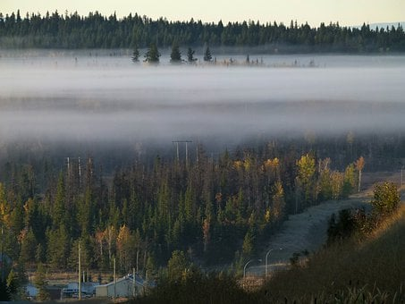 Fog Bank, Early Morning Fog, Forest, British Columbia