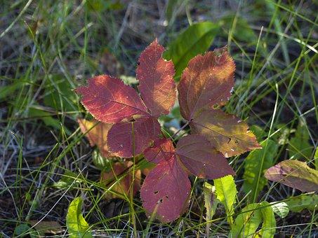 Autumn, Golden Autumn, Leaves, Fall, Foliage, Garden