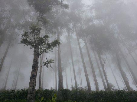 Lipton's Seat, Fog, Forest, Haputhale, Sri Lanka