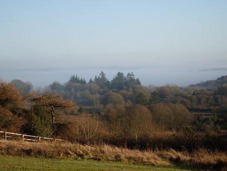 County Sligo, Countryside, Forest, Landscape, Sligo