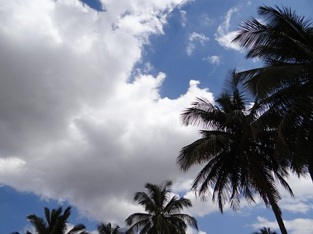 Palm Trees, Clouds, Stratocumulus, Sky, Dharwad, India
