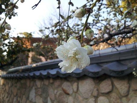 Flowers, Kobe, Mikage