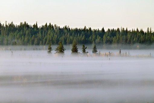 Fog Bank, Early Morning Fog, Landscape, Forest, Scenery