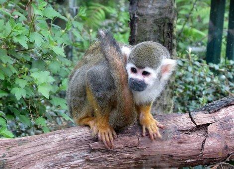 Monkey, Děčín Zoo, Mammal, Animal, Small, Cute