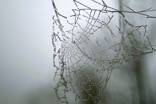 Cobweb, Ice, Not Cold, Frost, Frosted, Morning, Cool