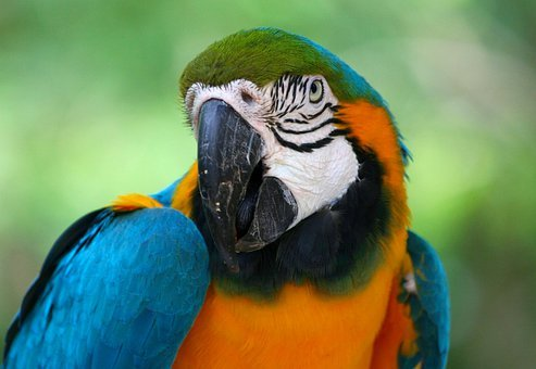 Parrot, Tropical, Bird, Beak, Colorful, Feather, Exotic