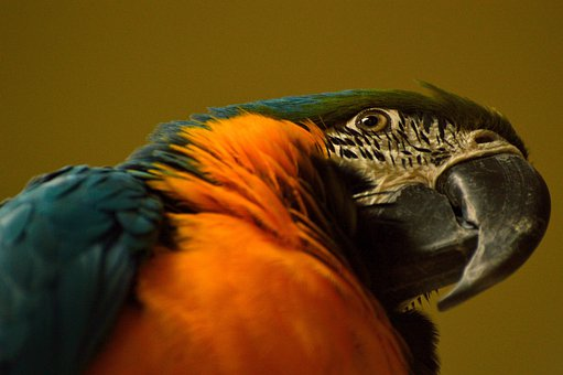 Blue-gold Macaw, Parrot, Bird, Tropical, Exotic